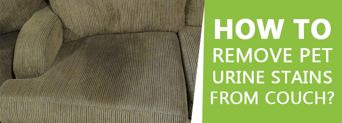 Enjoyable How To Remove Pet Urine Stains From Couch Fresh Pabps2019 Chair Design Images Pabps2019Com